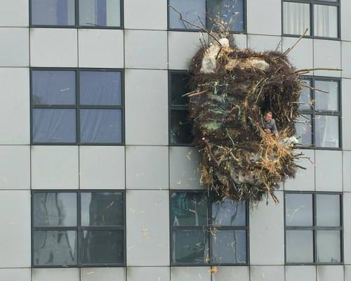 rotterdam-nest-2.jpg